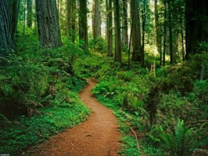 cart path dans bois