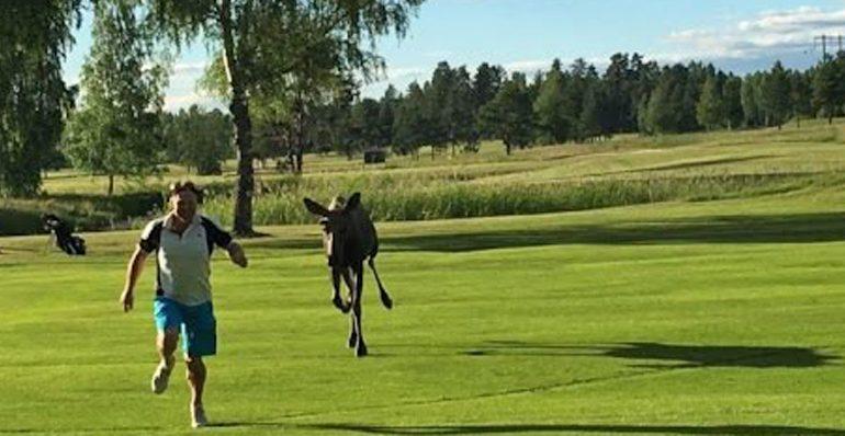 Un «élan» de golf orignal… euh original!